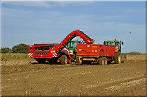 TA0114 : Potato Harvesting near Worlaby by David Wright