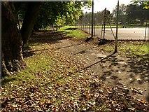 SX9164 : Autumn leaves, Upton Park by Derek Harper
