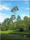 SE2768 : Studley Royal Trees - 2 by Terry Robinson