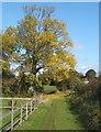 TM0461 : Tree at track corner near Dagworth by Andrew Hill