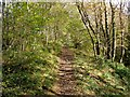 NS4079 : Footpath to Pappert Hill - near the woods' edge by Lairich Rig