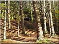 NY1521 : Rock Shelter by Bob Jenkins