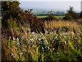 SU6506 : The Fort Widley Trail by Chris Gunns