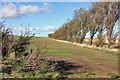 SE9755 : A wind break west of Kirkburn by Peter Church