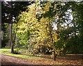 ST8389 : Afternoon sunshine on autumn leaves at Westonbirt arboretum by Roger