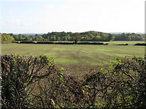 SO9250 : Fields adjacent to Breach Farm by Peter Whatley