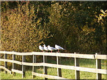 TM2850 : Four birds on a fence by Adrian Cable