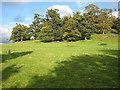 SO7433 : Wooded hillside, Bromesberrow by Pauline E