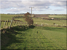 NZ7814 : Farmland west of Newton Brow Farm by Stephen McCulloch