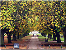 TA0729 : Autumnal Trees in West Park by Andy Beecroft
