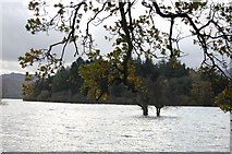 NY2621 : Lord's Island, Derwent Water by Trevor Harris
