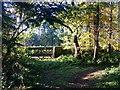 SE2585 : Quiet Corner At Thorp Perrow Arboretum by Steve Reeves