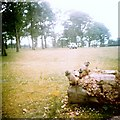 SJ4694 : Knowsley Safari Park by Gerald England