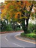 J3271 : Tree, Marlborough Park South by Rossographer