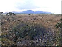 G7095 : Rough grazing, Lackaweer Townland by Mac McCarron