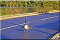 TQ3096 : Canada Goose with aeroplane wings by Christine Matthews