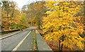 J3268 : Autumn at Minnowburn 2008 (7) by Albert Bridge