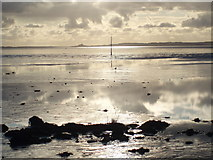 NU0842 : Wader, Holy Island Sands by Adam Ward