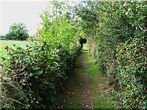 TQ1563 : Footpath west of Claygate station by Mike Quinn