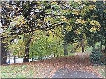 NT2674 : Woodland, London Road by Richard Webb