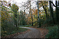 SW8842 : Road through Lamorran Wood by Fred James