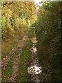 SX4662 : Blaxton Lane by Derek Harper