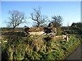 NZ1584 : Fallen tree by Oliver Dixon