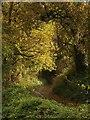 SX4762 : Blaxton Lane by Derek Harper