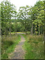 NS3984 : Whinny Hill Woods - start of the loop walk by Lairich Rig