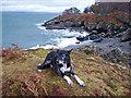NM7227 : Basil at Rubha nan Sailthean by Richard Dorrell