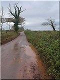 SX8757 : Waddeton Road by Derek Harper