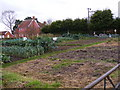 TM3560 : Allotments at the Riverside Centre by Adrian Cable