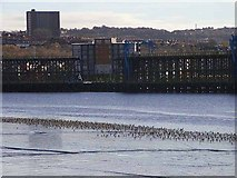 NZ2362 : Dunston Coal Staithes and wading birds by Oliver Dixon