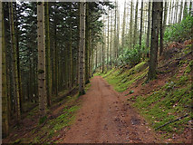SN7673 : Path heading away from Hafod car park by Nigel Brown