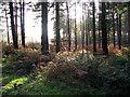 TG3130 : Mid-November sunshine by Evelyn Simak