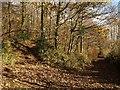 SX7267 : Track junction, Hembury Woods by Derek Harper