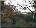 SE2908 : Bridleway near Cawthorne Beck by Steve  Fareham