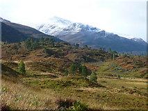 NH2230 : Native forest regeneration on the south side of Glen Cannich near Loch Mullardoch dam. by Rob Pedley
