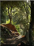 SX9065 : Path through Chapel Hill Pleasure Grounds by Derek Harper