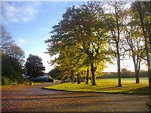 NJ9304 : Trees in Duthie Park by Bob Embleton