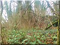 SN0514 : Limekilns near Blackpool Mill by Deborah Tilley
