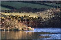SC2878 : Swan nesting on Kionslieu Reservoir by Andy Stephenson