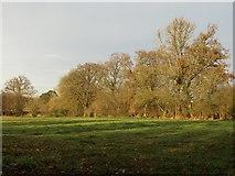 ST0107 : Field by Goblin Lane by Derek Harper