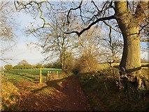 ST0107 : Goblin Lane by Derek Harper
