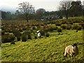 NY7146 : Pasture, Alston by Andrew Smith