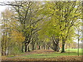 NY9265 : Avenue of trees on Tyne Green by Mike Quinn