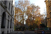 TQ3281 : Autumn colours in Finsbury Circus by N Chadwick