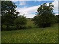 NZ0657 : Meadow next to Lynn burn by Clive Nicholson