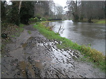 SU9948 : Mud, glorious mud on the riverside path into Guildford from Shalford Park by Basher Eyre