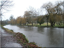 SU9948 : Delightful avenue of trees alongside the River Wey approaching Guildford by Basher Eyre